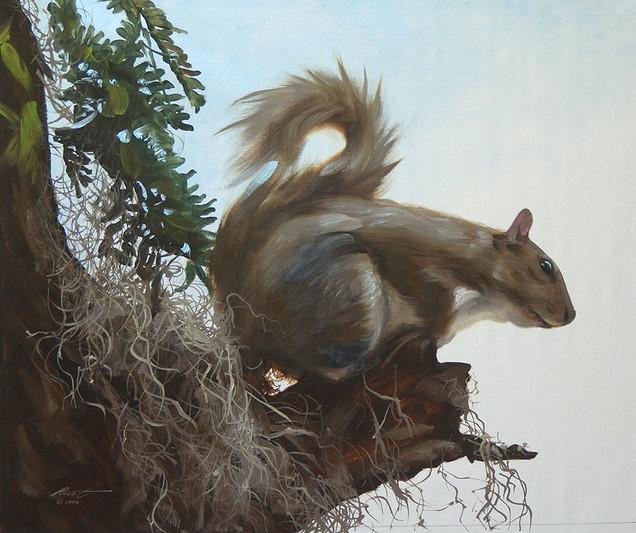 S-72-squirrel.jpg