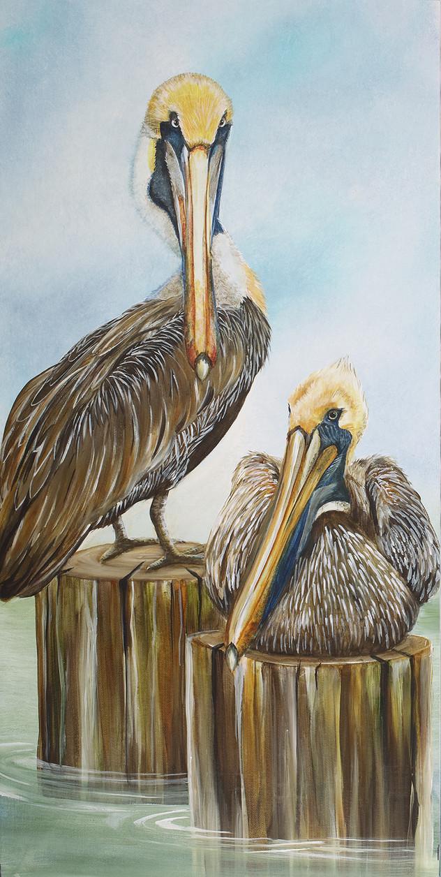Pier 2 - Pelicans