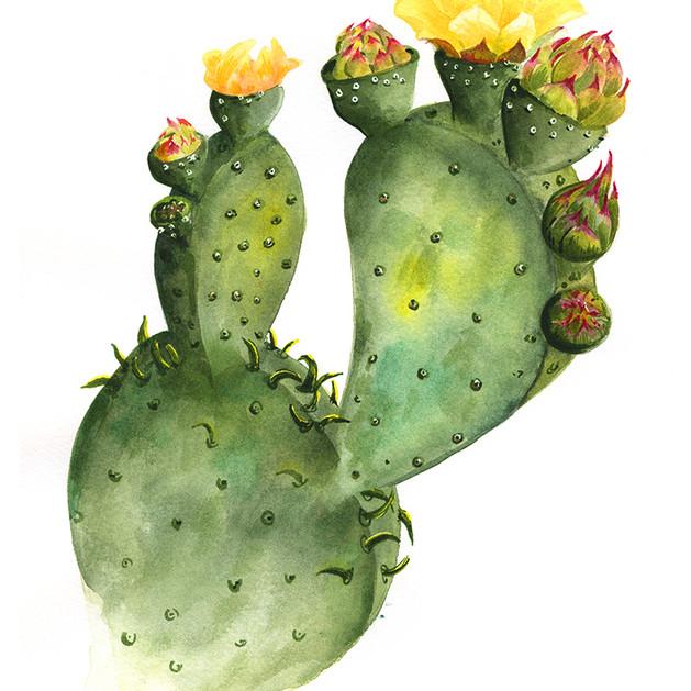 Womble Cactus