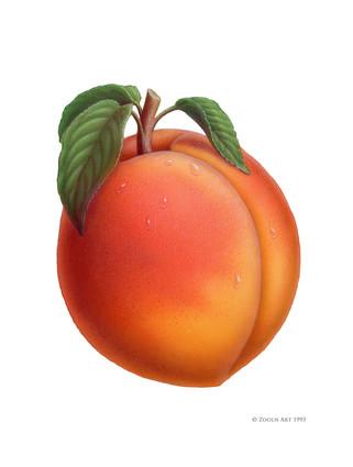 fruit-peach.jpg