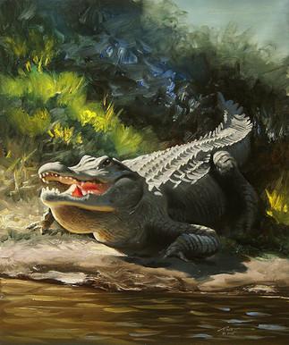 A-78-alligator.jpg