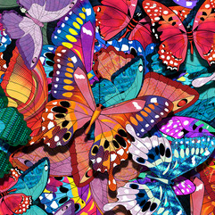 Butterflies Home Page