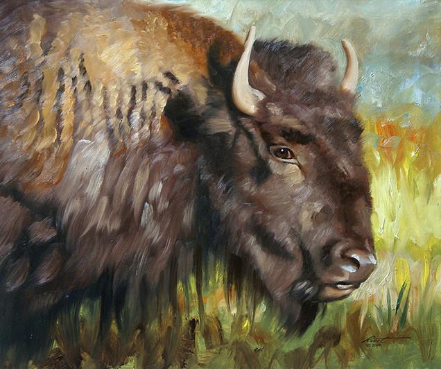 B-67-bison.jpg