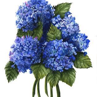 Blue Hydrangea Bouquet 2