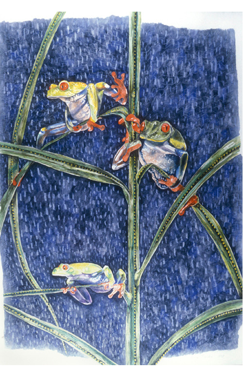 Nightsong (Reptile Series - Tree Frogs)