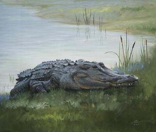 A-72-alligator.jpg