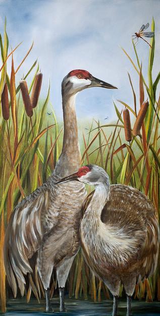 Sandhill and Cranes