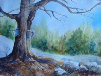 Maple Tree with Sap Buckets