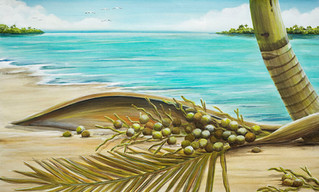Coconut Coast II - Tropical