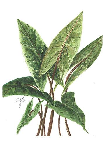 christine's plant.jpg