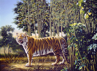 T-2 Hidden Tiger.jpg