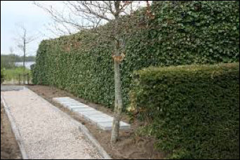 Begraafplaats OL - Urnenplaats.jpg