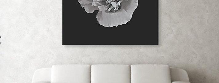 Botanical Poppy