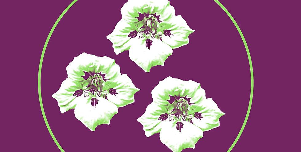 Purple Nasturtium
