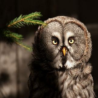 bart-owl-3536652.jpg