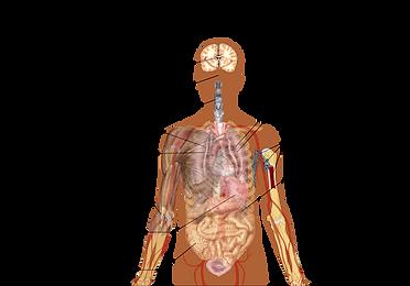 langfr-1199px-Symptoms_of_coronavirus_di