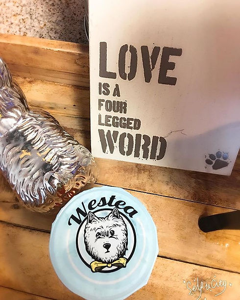 Love is four legged word 🐶🐾❤️ #love #westie #westeaincali #bubbletea #dogcafe #amazing