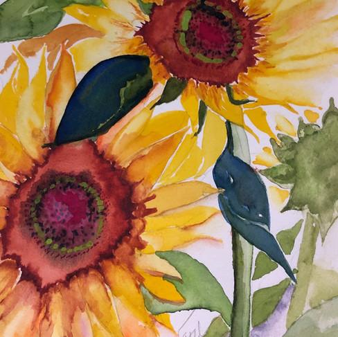 A Trio of Sunflowers