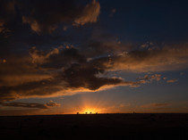 Cattle Sunset, Texas