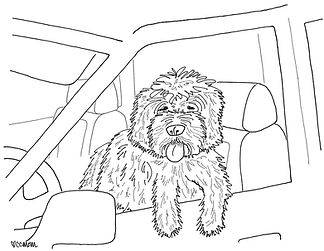 This furry pup keeps an eye on the road from his perch in the driver's seat. So cute!