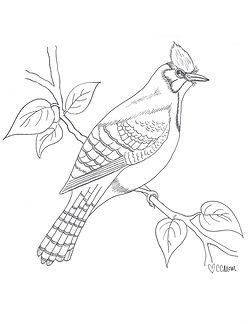 For all the bird enthusiasts out there! Help yourself to this blue jay coloring page. It's one of the featured illustrations in the new Custom Coloring Mom coloring book.
