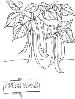 Hands down: Custom Coloring Mom's all-time favorite veggie from the garden. Green beans!