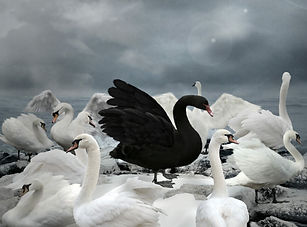 Swan-lake-Holding-image-scaled-888x654-c