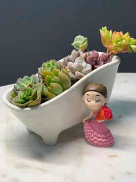 Customized succulent gift