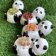 Cute Panda succulent pot