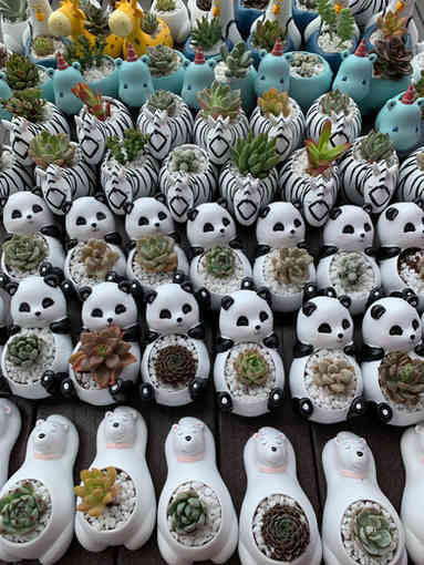 Cute Succulent Animal Pots