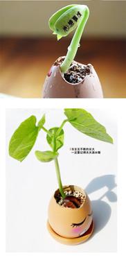 Green Thumb X Magic Beans