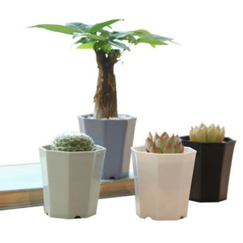 Designer pot for succulent plant