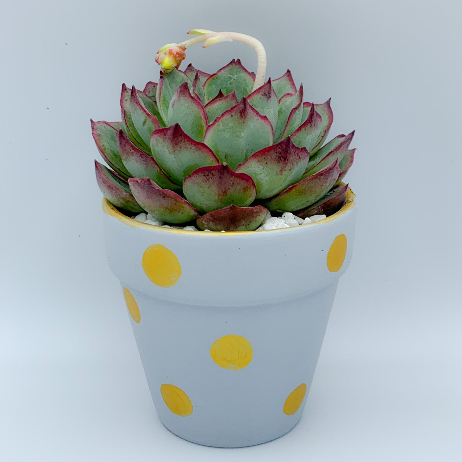 Green Thumb X Succulent Vending Machine