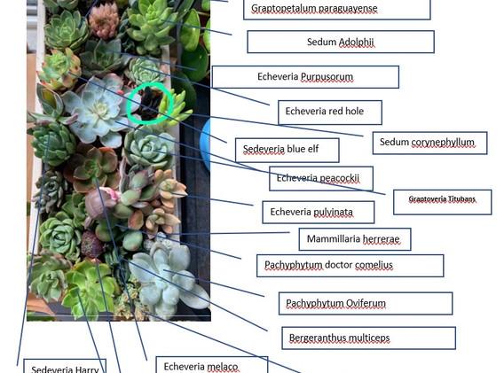 Succulents Names Green Thumb X