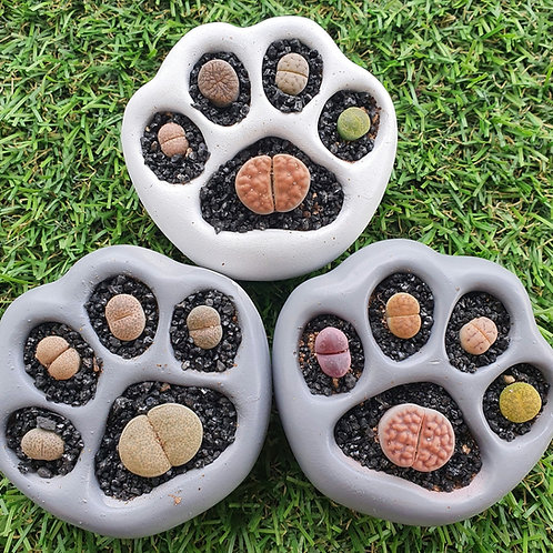 Bear Paw Print Lithop Gift Set