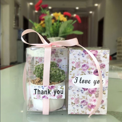 Designer Succulent gift set. Moss planted, no repotting required