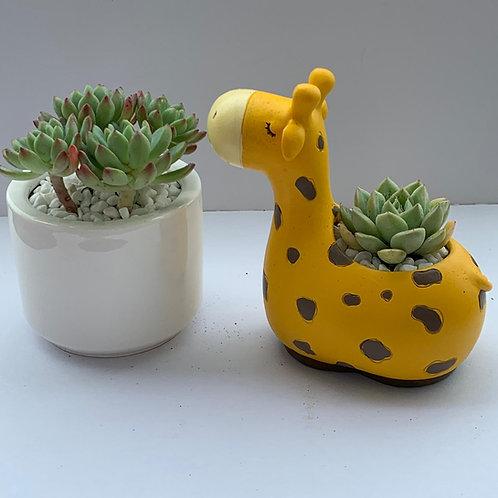 cute animal pot succulent greenthumbx