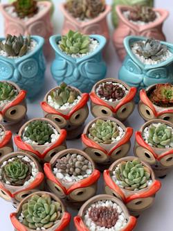 Colour Owls Pots