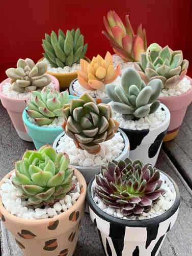 Cute Hand-painted Pots