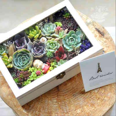 Premium Succulent Gift Set