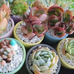 Succulent Colour Pot