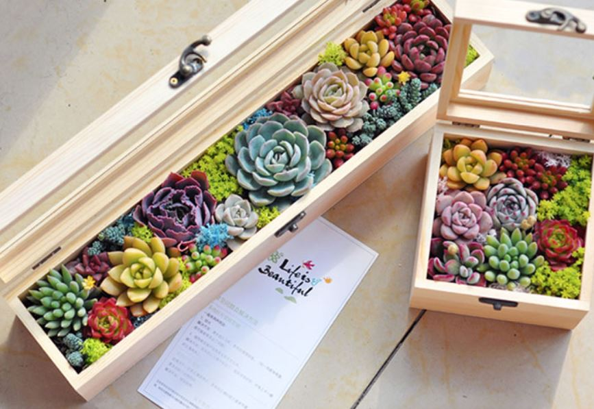 Premium Succulent Gift Box Set
