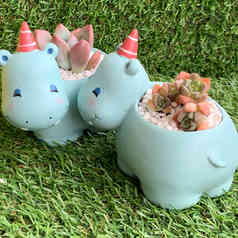 Cute Hippo Succulent Pot