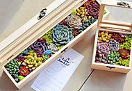 Gift Box 1h.JPG