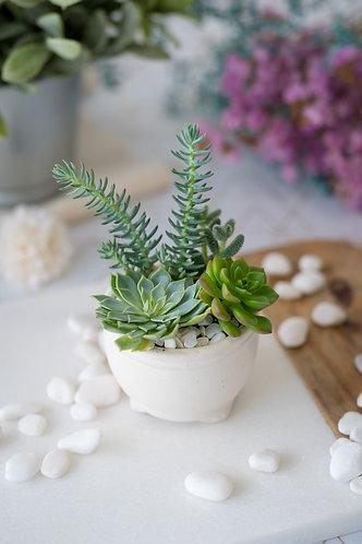 exotic succulent mini garden design terrarium set