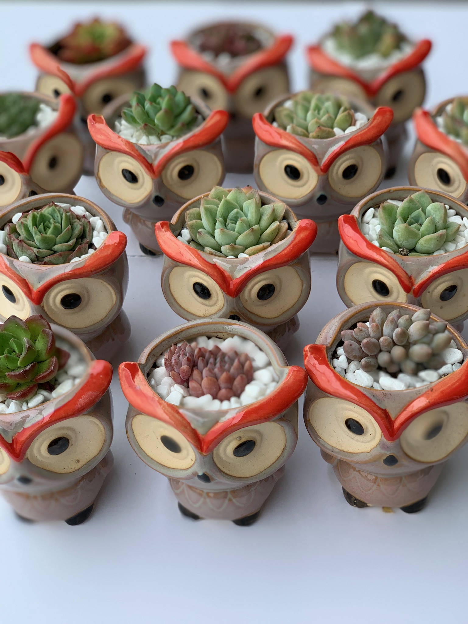 Coloured Owl Pots