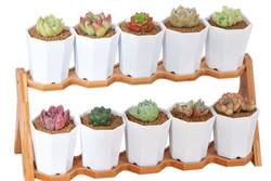 Designer Pot Stands with Pots