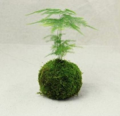 designer moss for terrarium