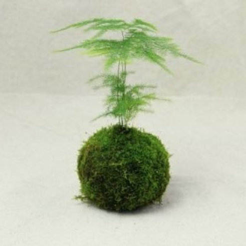 designer moss for terrarium