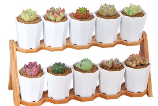 Green Thumb X Succulent Starter Kit with Designer Pot Stand